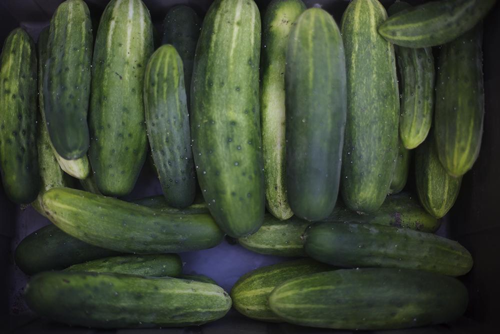 cucumbers_lowRes.jpg