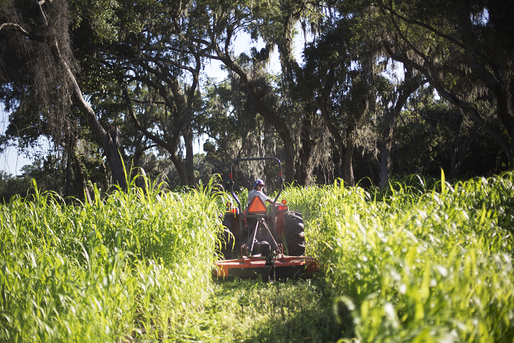 Mowing Sudex Cover Crop