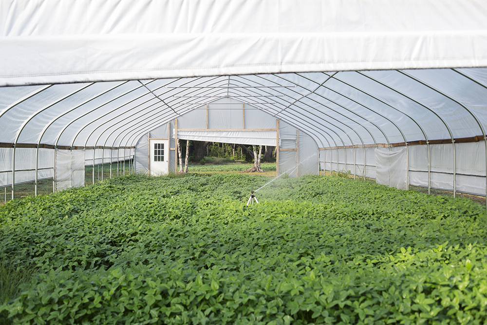 Hoop House Summer Cover