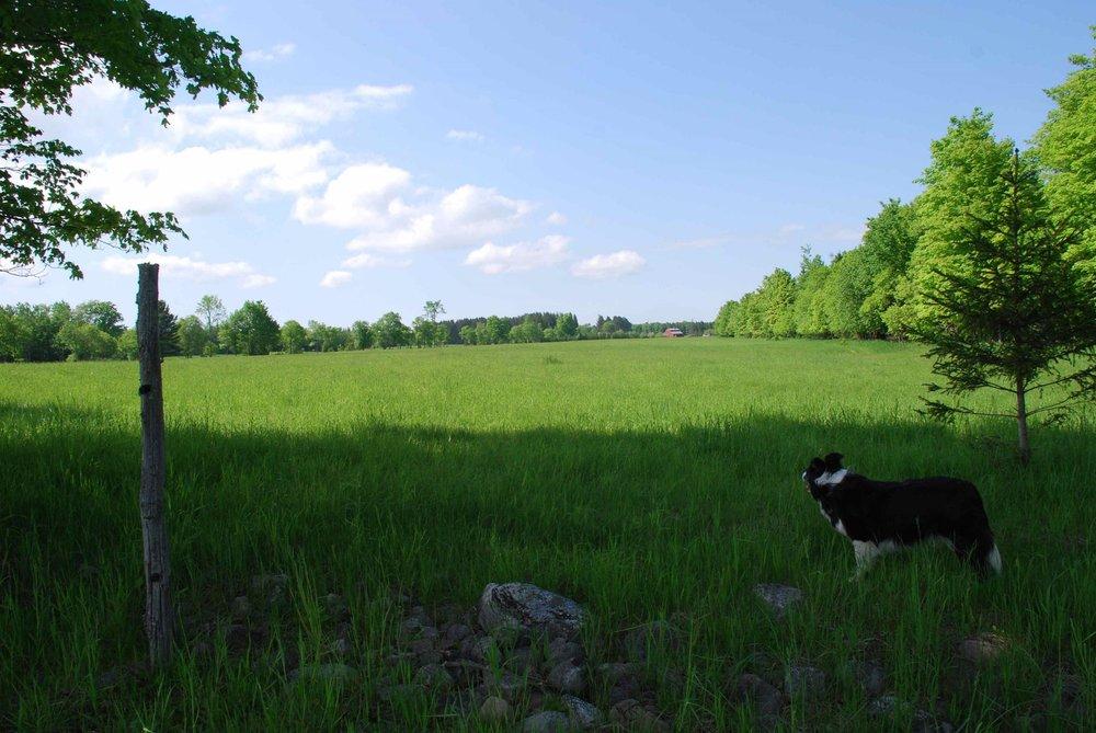 farm pic.jpg