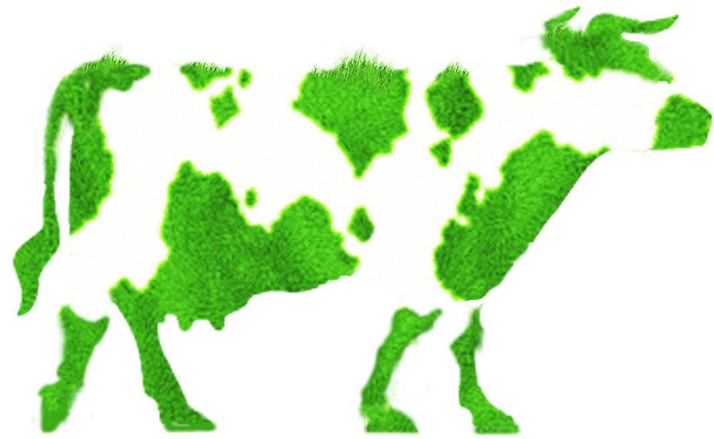 greencow.jpg