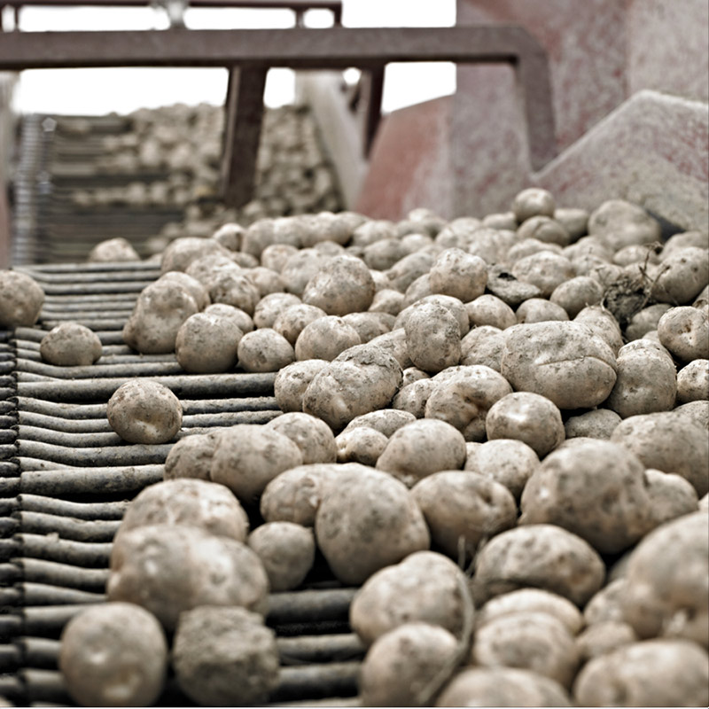 The potato plays an important role for Canadian farmers and food manufacturers and farm gate receipts alone amount to approximately $1.1-billion per year.