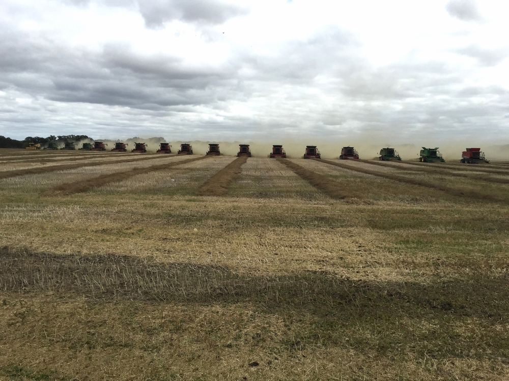 As part of a growing project in Killarney, Manitoba 17 farmers brought out combines to help harvest 140 acres of canola for distribution to those in need worldwide.