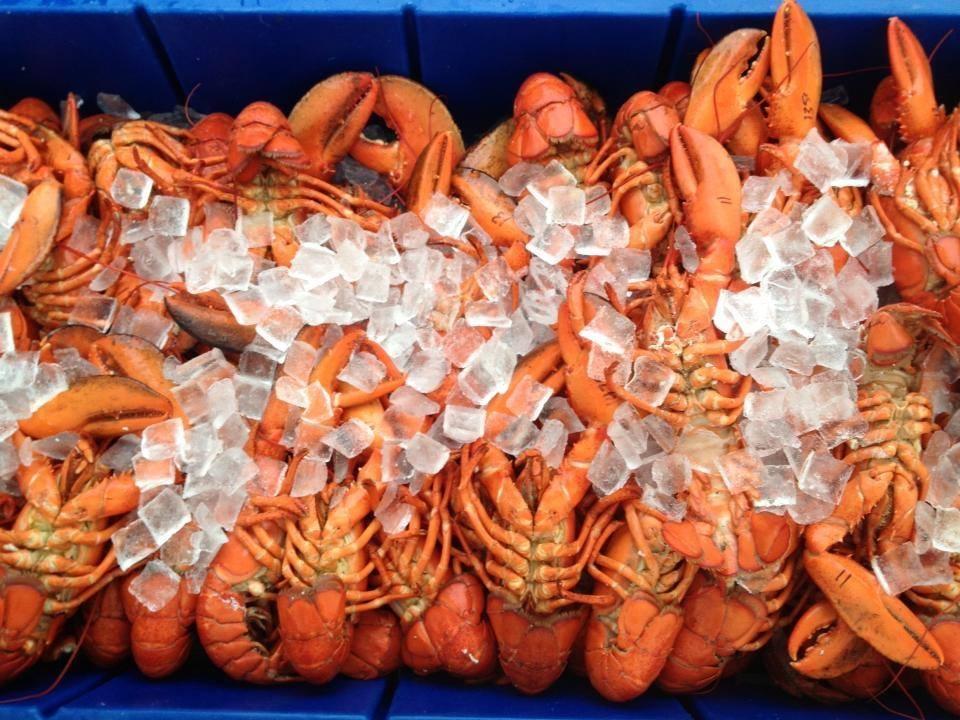 Capn' Mikes Lobster Rolls & Seafood.jpg