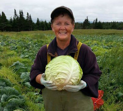 Cabbage crop.jpg