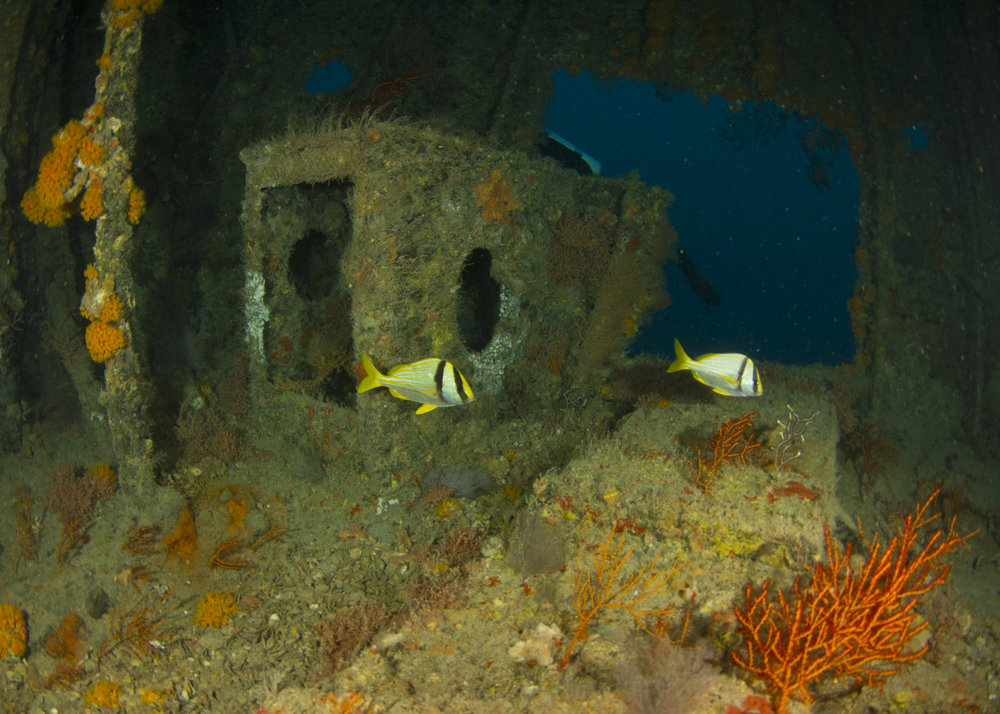 Lowrance Shipwreck