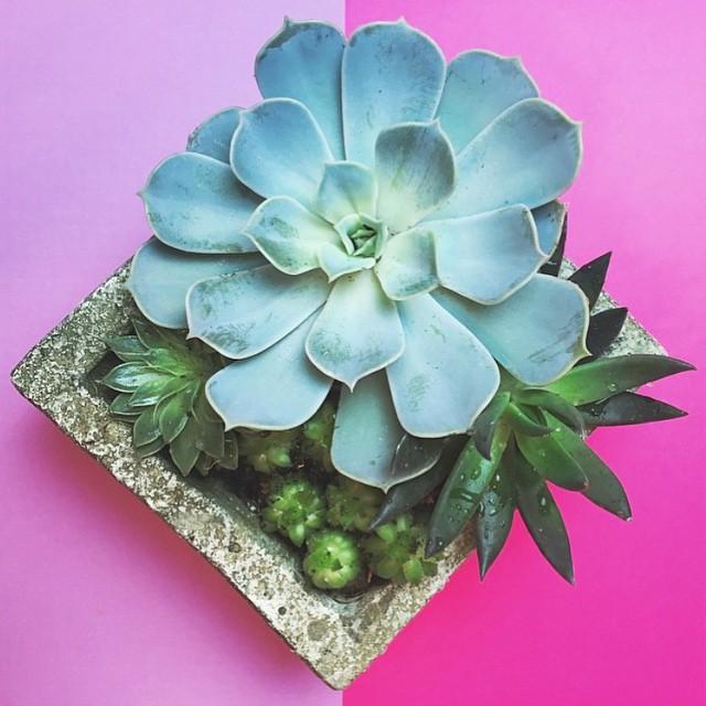 🌱 #succulents