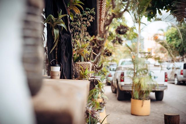 #SanPancho surf walk - close out sets and cactus friends - #cacti #succulents #mexico #surf #vacation #wandering #exploring #relaxation #nayarit #lookingthrough #streets #contrast #duality #alleys #culture #texture #balance #moments #focus #color #igdaily #instagood #leica #m #typ240 #leicaphoto #leicacamera #nockton #500px