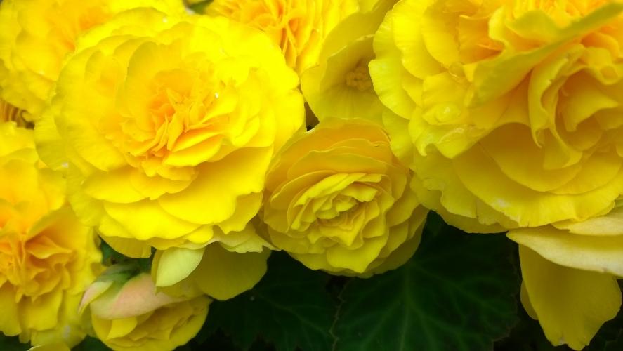 Yellow Love.  Briga Saulė, 2014