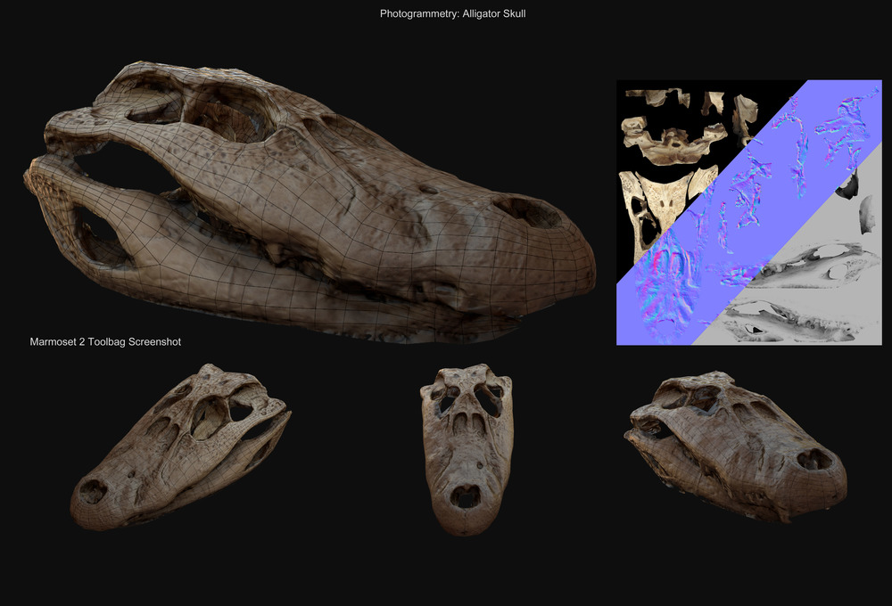 Alligator Skull - Model running in realtime engine. (Upper Right: Model textures) - David McDonald