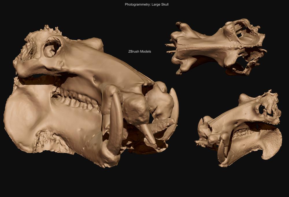Large Skull - Final mesh - David McDonald