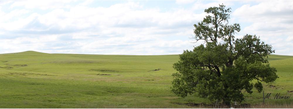 Flint Hills - Tree.jpg
