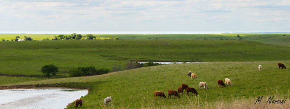 Flint Hills - Green Pasture.jpg