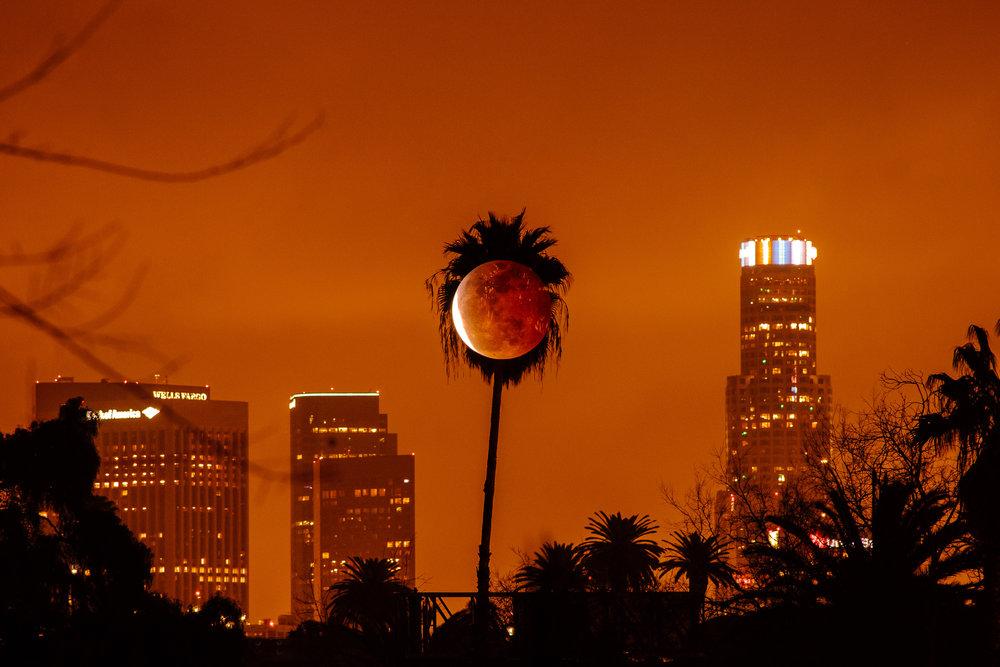 palm eclipse.jpg