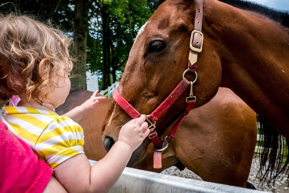 Round Hill Farm horses