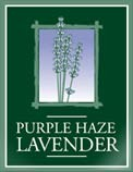 Purple Haze Lavender, Sequim