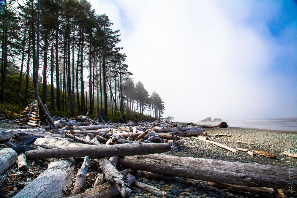 Driftwood and Beach