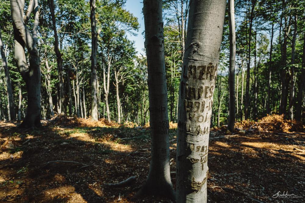 Na hodně stromech tu najdete podobný popisky. Údajně ty stromy pak sloužily jako záchytný body pro chlapy, vracející se z dolů (je jich tu požehnaně a byl to dřív zásadní zdroj přijmu každý rodiny).