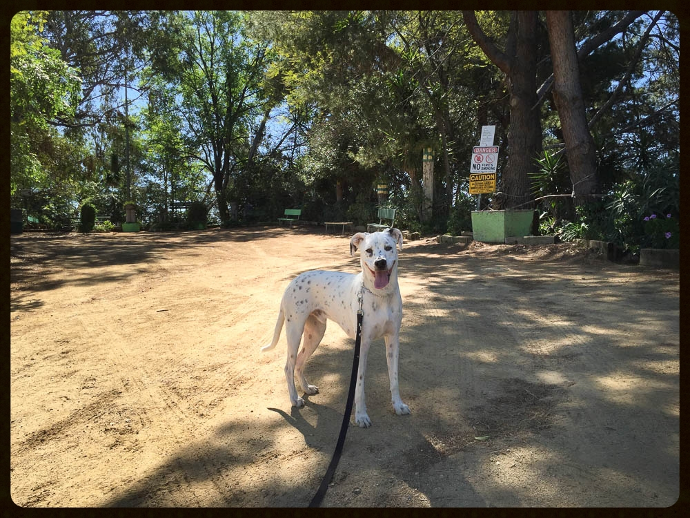 taking fountain los angeles dog friendly chance the rescue dog griffith park 8.jpg