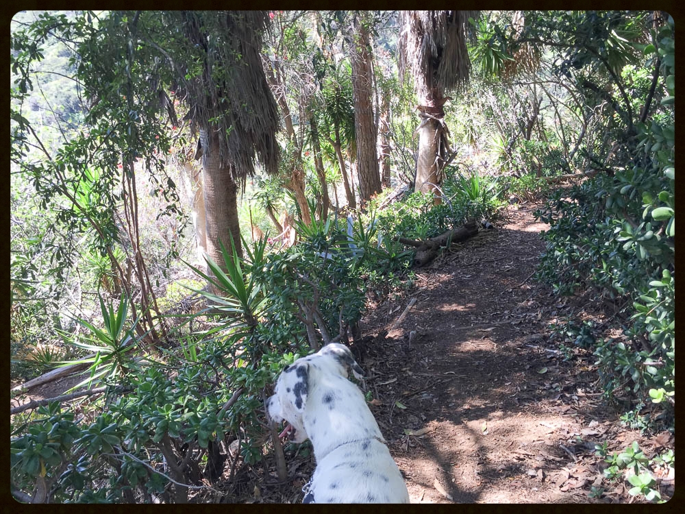taking fountain los angeles dog friendly chance the rescue dog griffith park 11.jpg