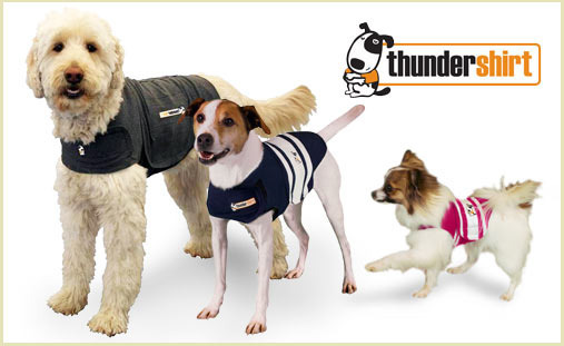 taking fountain los angeles dog tips advice thundershirt.jpg