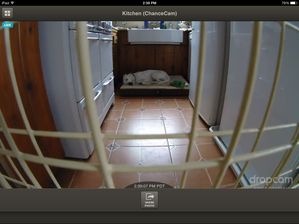This is an actual screenshot of the streaming video feed, using the iPad app. Dropcam is THE BEST. And yeah, that's Chance, who has a really hard life.