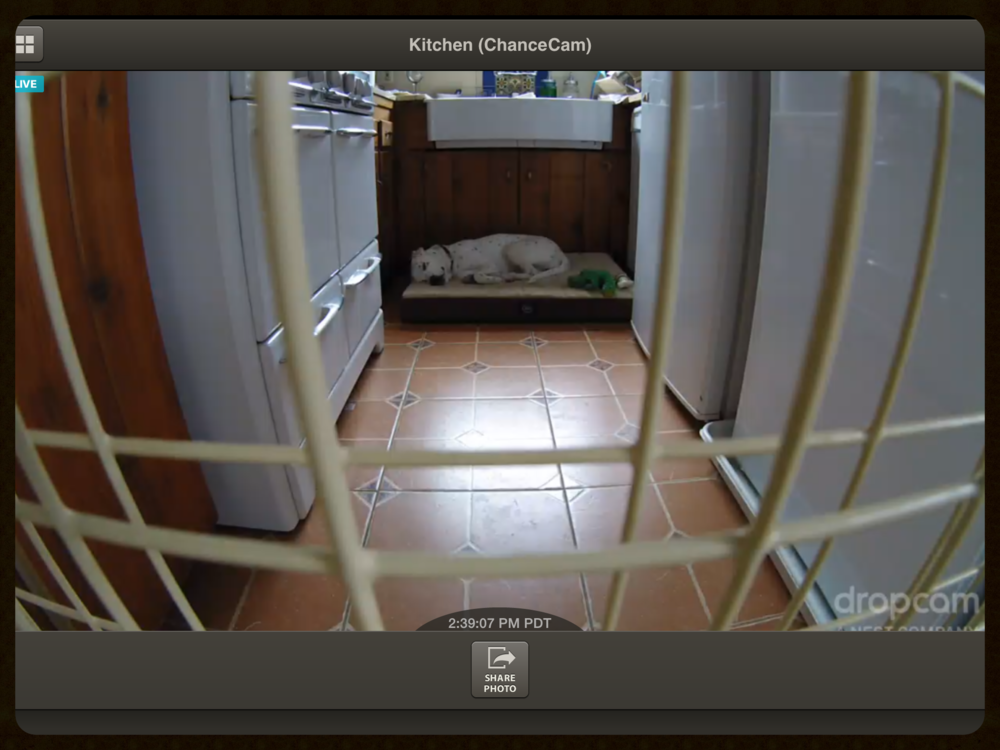 Using Dropcam to spy on my dog in the kitchen while I'm gone.
