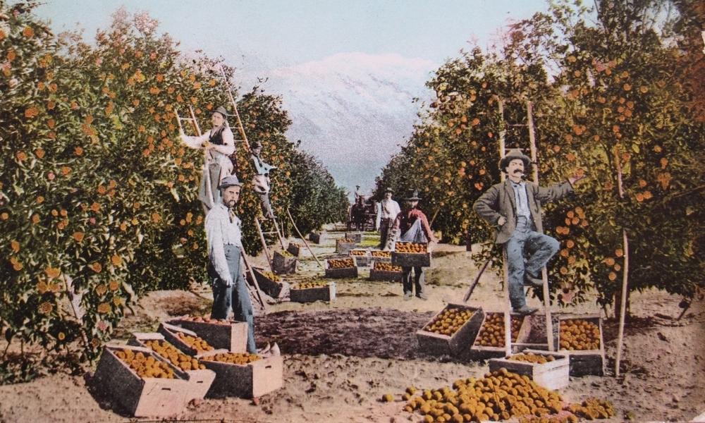 postcard workers in orange grove.jpg