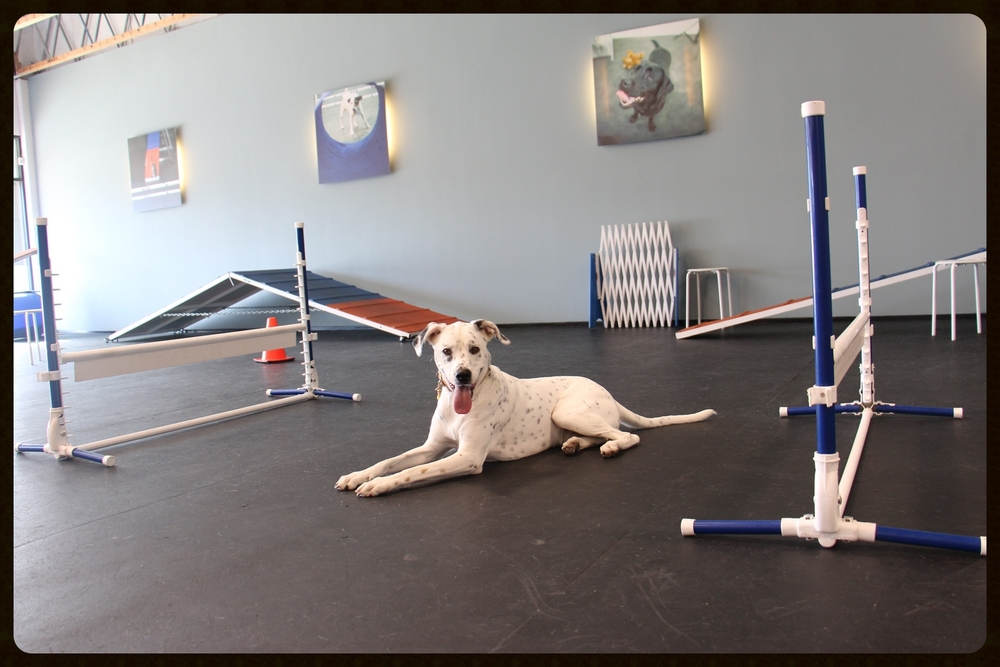 Working on agility during a Private Gym session at Zoom Room.