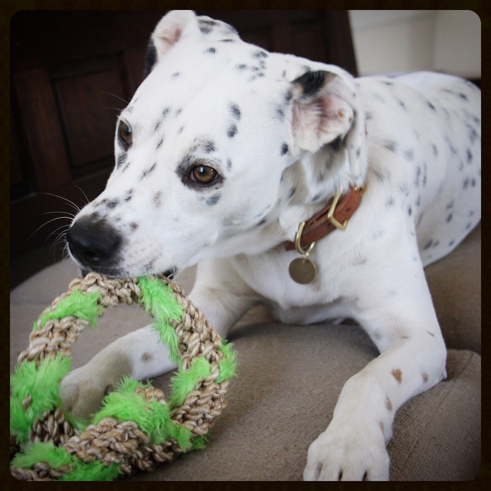 taking fountain los angeles dog friendly chance the rescue dog.jpg