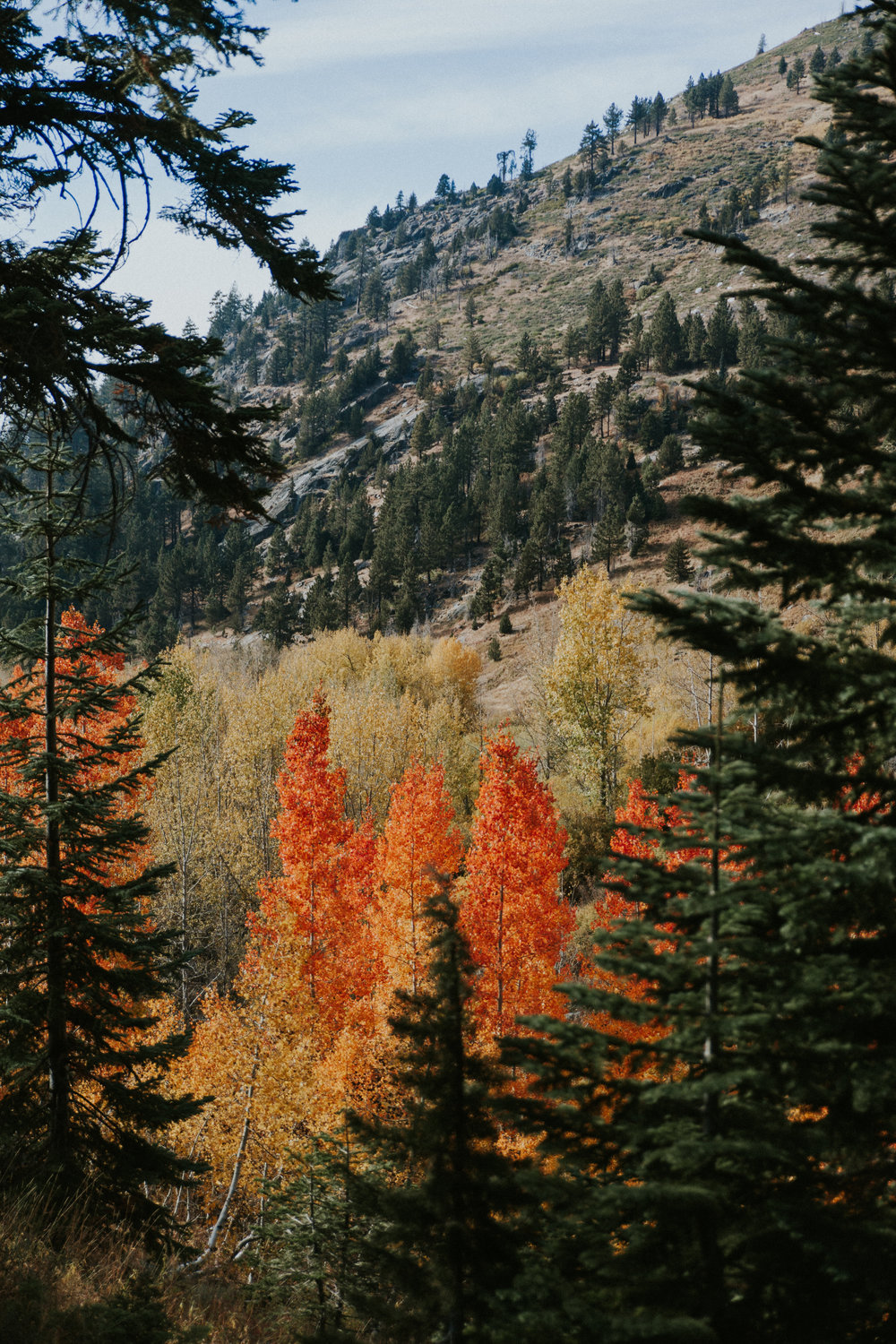 Mineral King was the most magnificent colors when we visited in the fall.  We couldn't believe our eyes and that we were seeing bright red leaves in the Sierras!  The trees looked as if they were on fire, sprinkling the valley with pops of color.