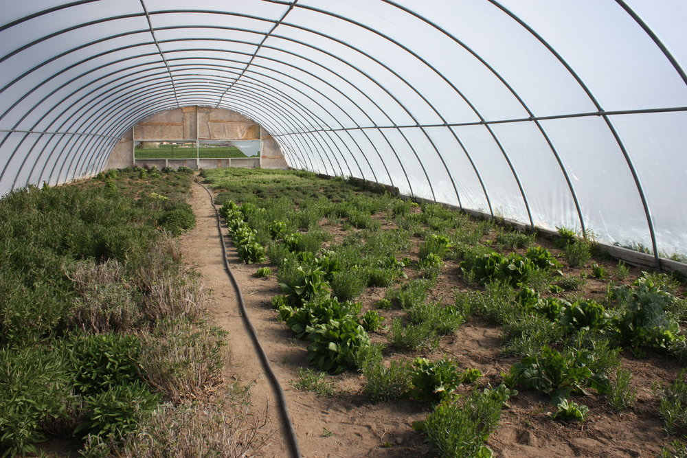 Severe Storm Damage to Local Greenhouses   Purple Sage Farms Needs Your Help!   Read More