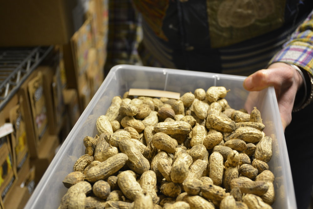 "Casey shows us ""Tenacious P"" peanuts kept in the walk-in cooler seed vault."