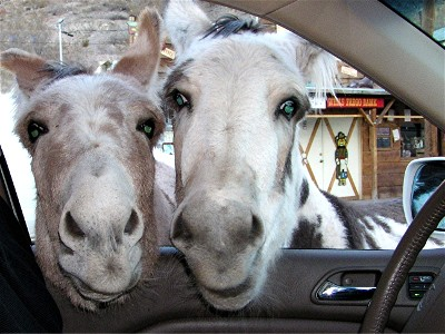 DA_oatman_donkey_car.jpg