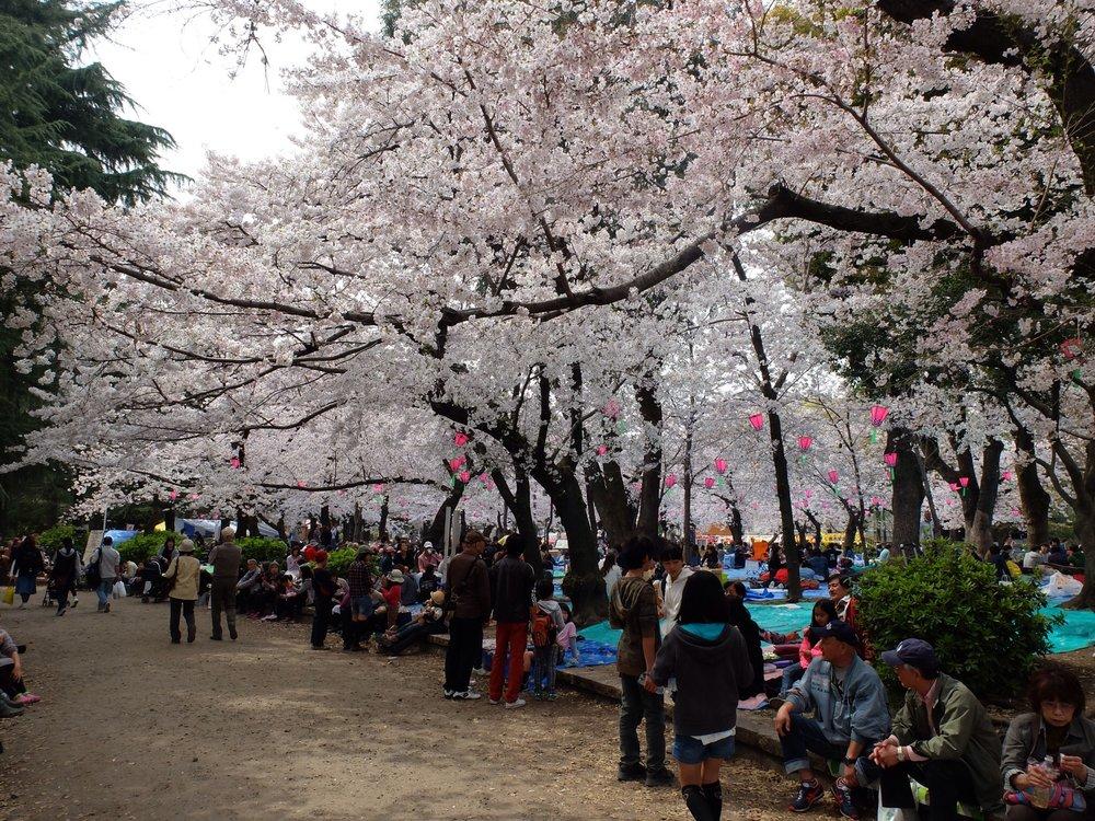 Tsuruma Park - nagoya1.jpg