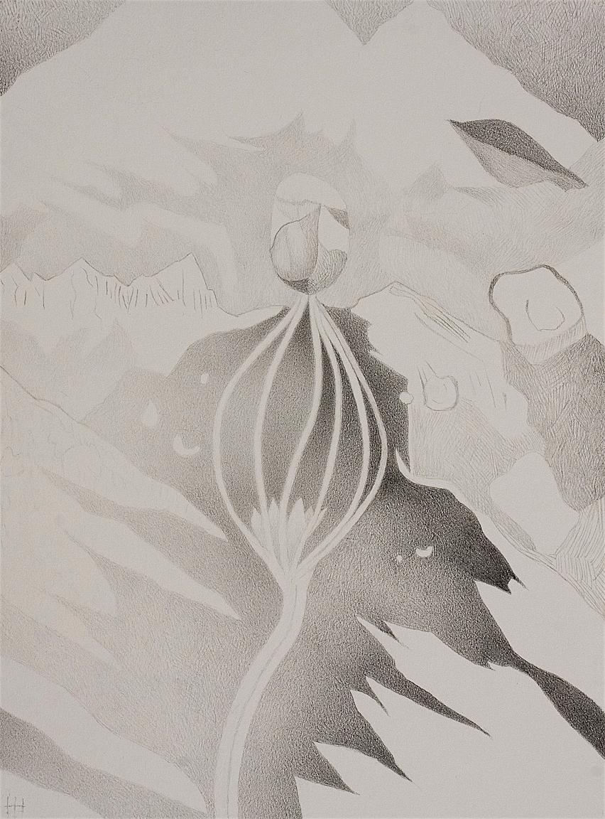 Pinyon Seedling (Miramonte)