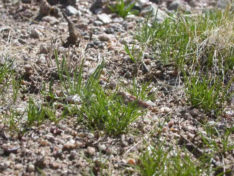 Small tufts of grass covered the desert surface
