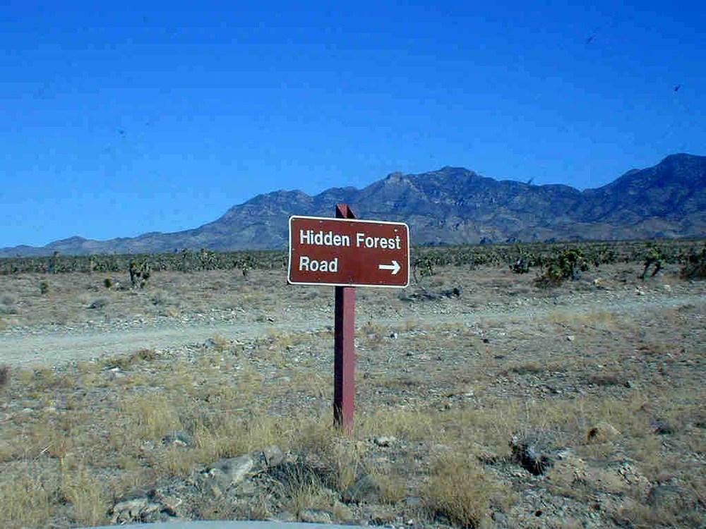 Hidden Forest Road begins here