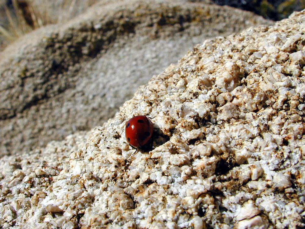 Ladybug, Ladybug, fly away home