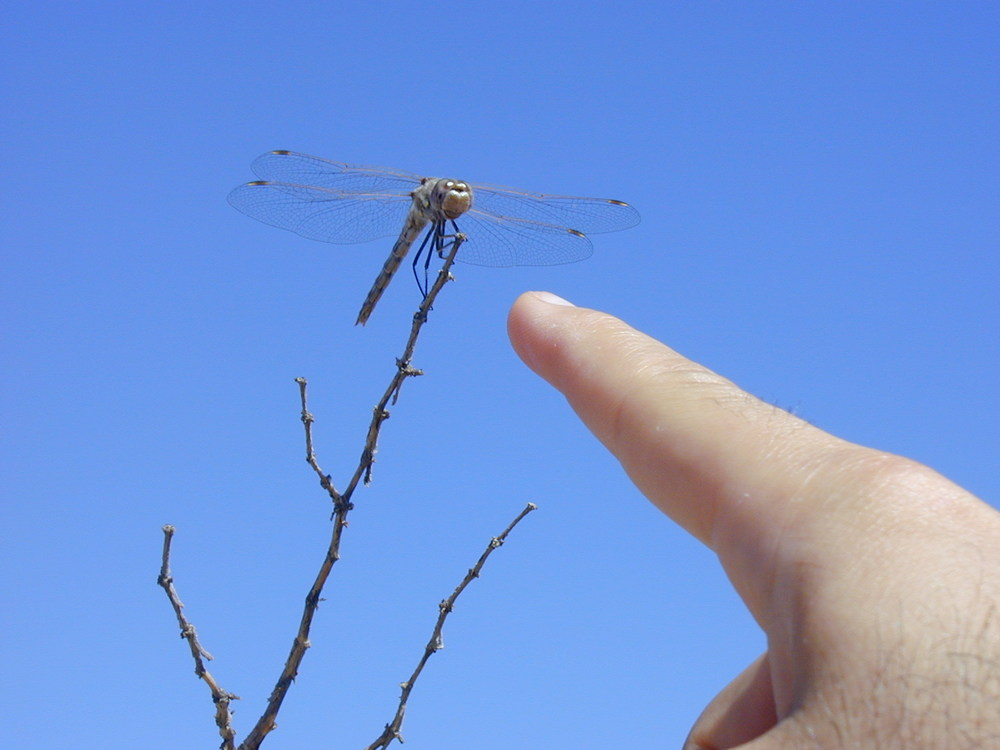 A flying dragon (a.k.a., dragonfly) perched over us. The creature is hard to see, so we point it out in the picture.