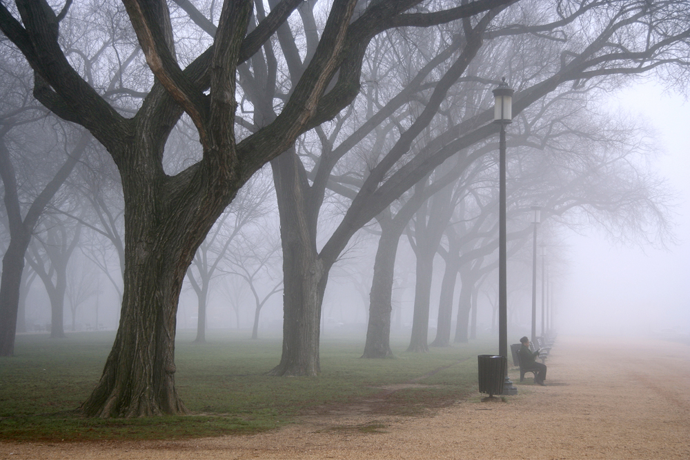 Foggy Morning on the Mall