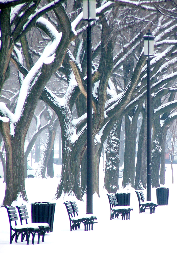 Winter on the Mall