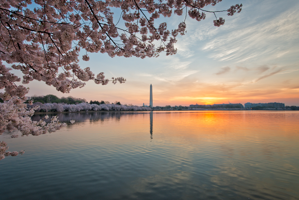 Tidal Basin, April Sunrise