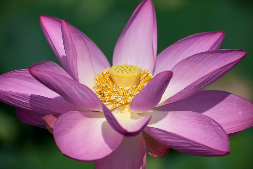 Goodwin Lotus 5 301-580-5909.jpg