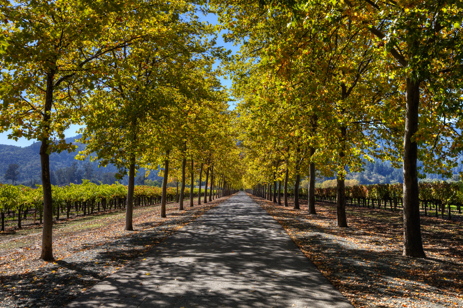 Napa in Autumn