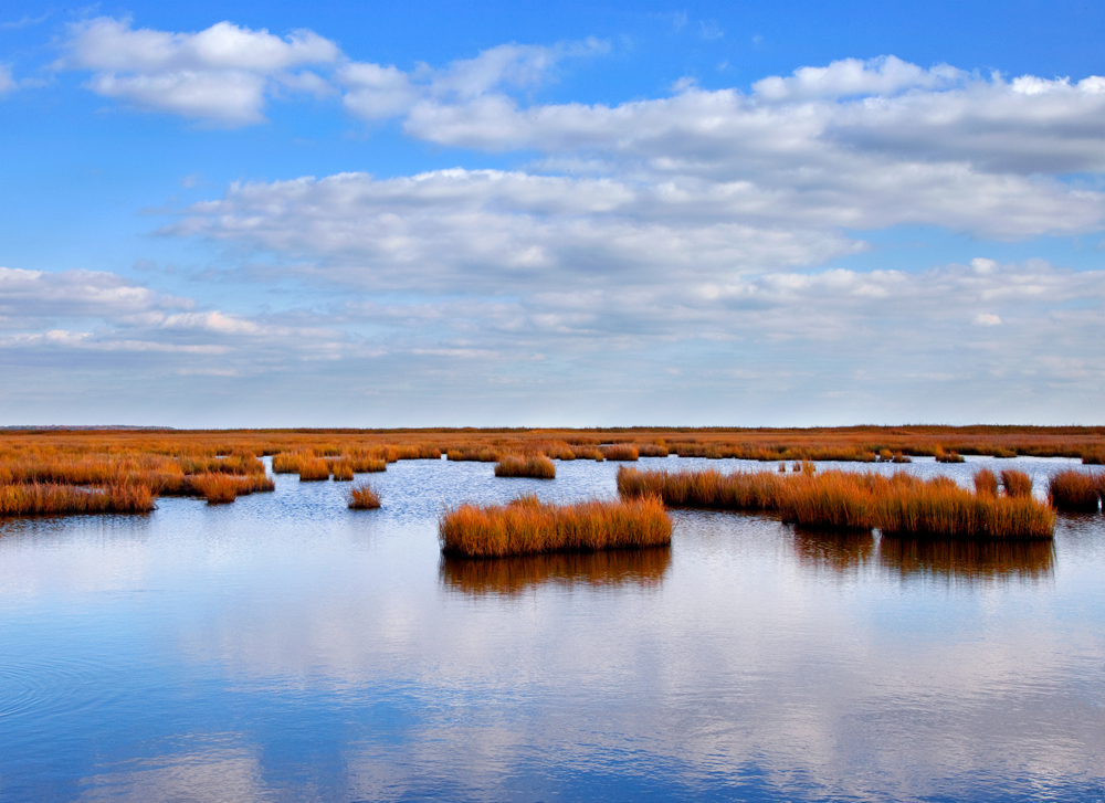 Blackwater Wildlife Refuge, October Afternoon