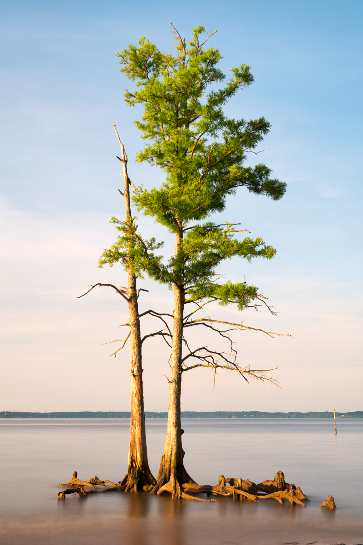 James River, June Morning