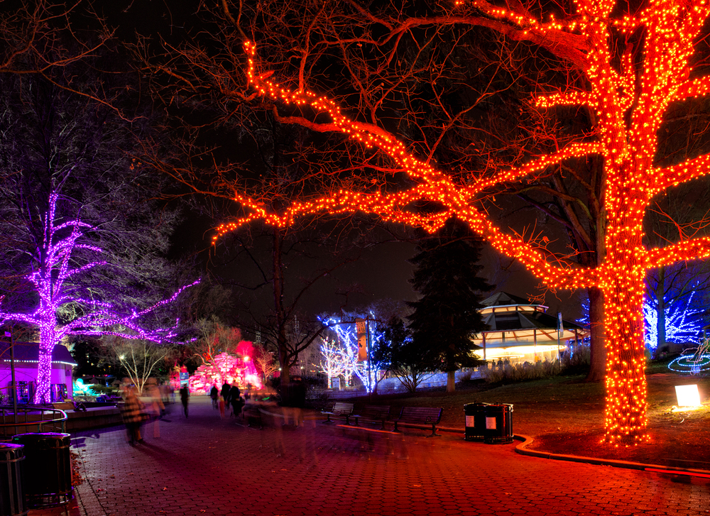 Zoo Lights at the National Zoo, December Evening