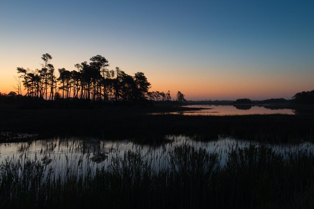 Assateague Island, May Sunrise