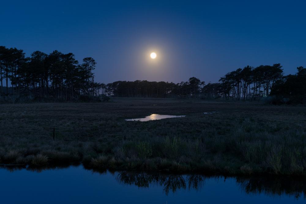 Assateague Island, May Moonset